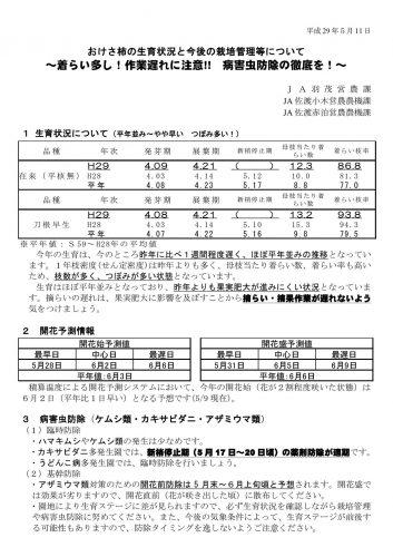 H29.5.11おけさ柿生育状況と栽培管理情報2